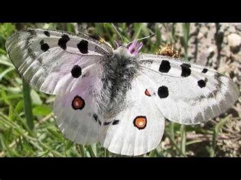 imagenes mas lindas del mundo las mariposas mas lindas del mundo youtube
