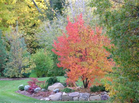 Landscape Zone 5 The Skillful Bee Favorite Garden Trees And Shrubs Zone 5 6