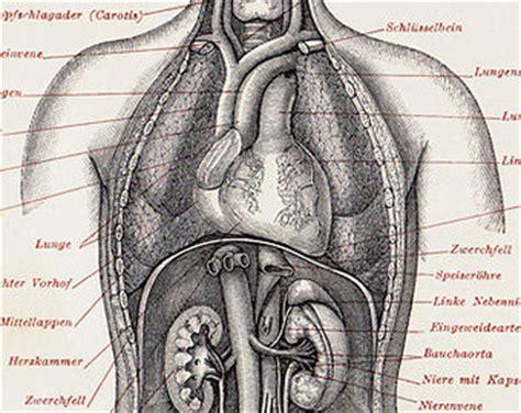 der menschliche körper innere organe pin menschliche innere organe on