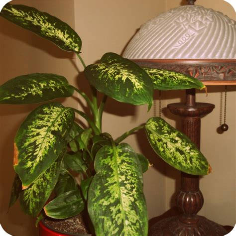 house plants that don t need light house plants that don t need sunlight myideasbedroom com