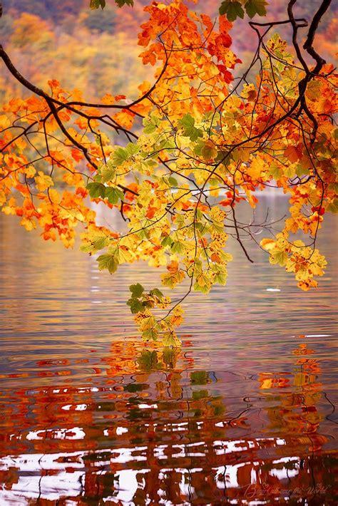 fall autumn best 25 autumn leaves ideas on autumn colours