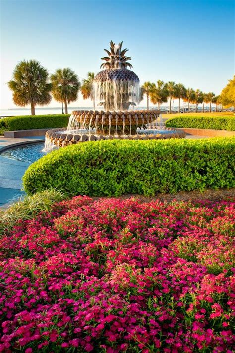 Botanical Gardens Charleston Sc 25 Best Ideas About Park On Pinterest Chicago Illinois River In Chicago And