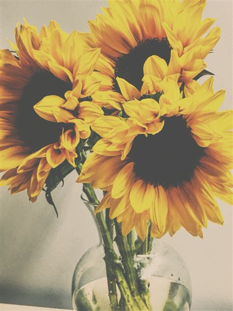 Photographic Florals by Soft Photography Vintage Sunflowers Photography Pretty