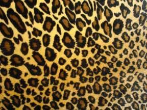 Jaguar Print Day 83 Of The Shoe Challenge Leopards Springolators