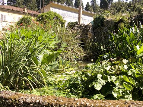 giardino botanico firenze immagine giardino botanico superiore di boboli a firenze v