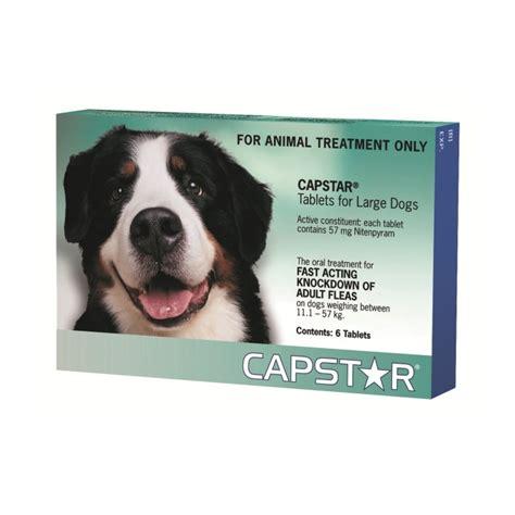 capstar for puppies capstar large flea treatment petbarn