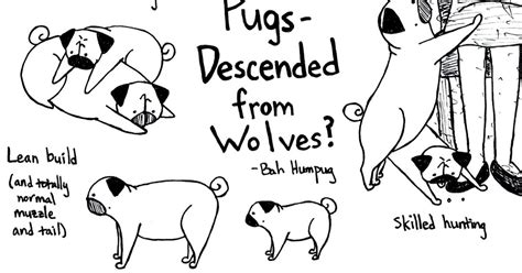 are dogs descended from wolves bah humpug pugs descended from wolves