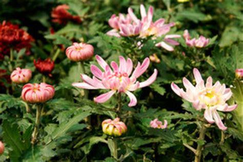 pflanzen die viel sonne vertragen welche blumen k 246 nnen viel sonne ab eine liste