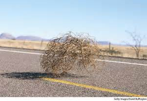 Tumbleweed Tumbleweed Dictionary Definition Tumbleweed Defined