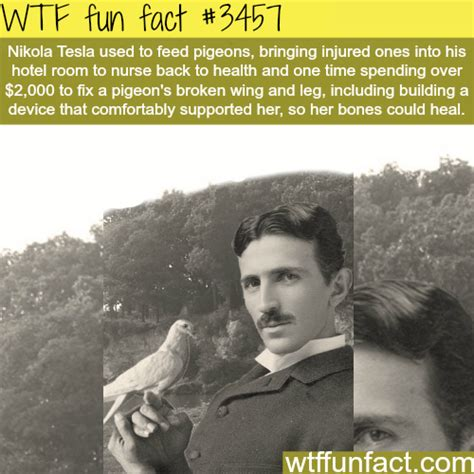 Information About Nikola Tesla Pigeon Facts