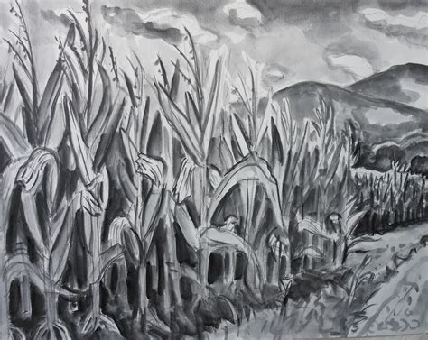 Corn Field Drawing kate knapp artist august 2011