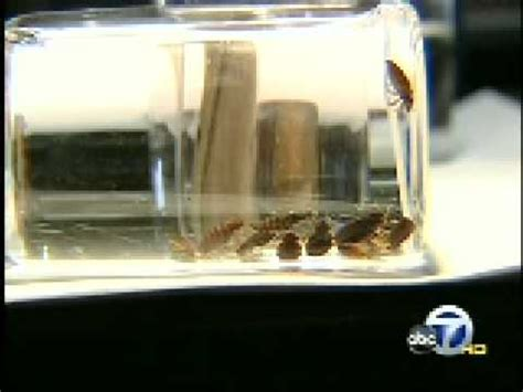 bed bugs san francisco kgo tv san francisco bed bugs invading bay area youtube