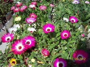 Best Indoor Flowering Plants Bedding Summer Bedding Packs