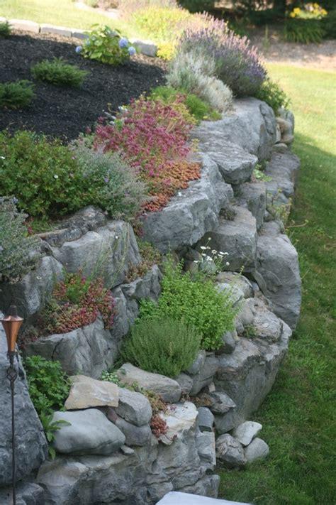 steingarten anlegen steingartenpflanzen unsere 6 favoriten machen die