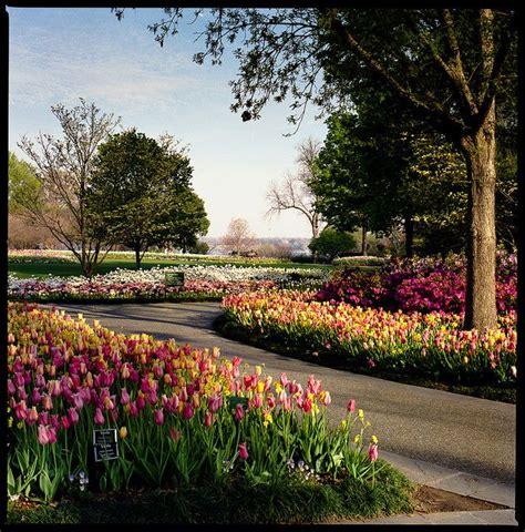 dallas blooms dallas and lone state
