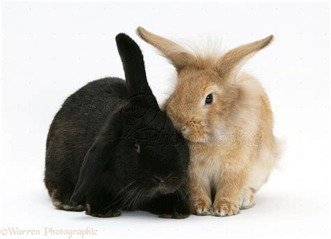 Two rabbits photo WP18869