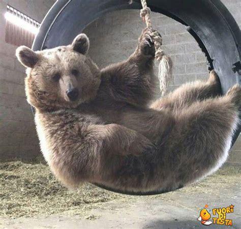 pigro testo un orso pigro immagini divertenti