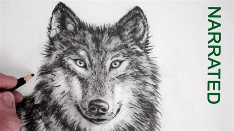 Drawing Wolf by Realistic Wolf Drawings