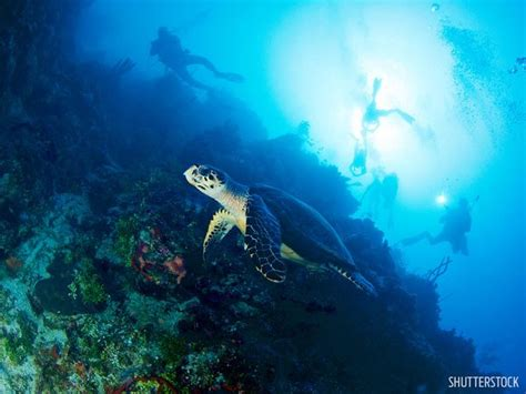 diving hairstyles world s best destinations for wall diving scuba diving