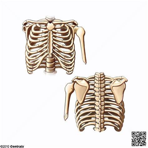 imagenes virtuales del cuerpo humano im 225 genes del cuerpo humano sin nombres el cuerpo humano