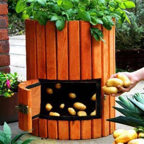 above ground planters above ground potato growing garden veggie fruit