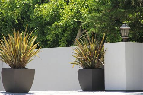 containers for plants garden design landscapes