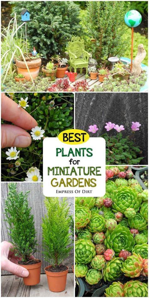 Resource Gardening Best Plants For Miniature Gardens Resource Guide Empress