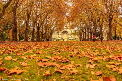 file leaves in the carlton missing autumn snippets of suri