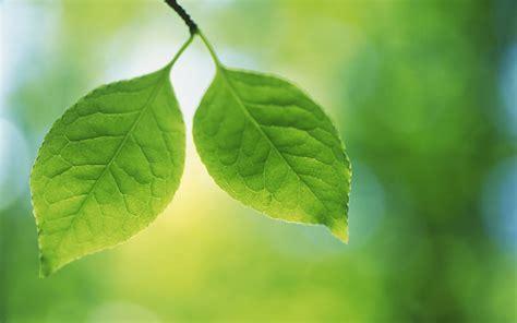 Imagenes De Hojas Verdes | hojas verdes green leaves fotos e im 225 genes en fotoblog x