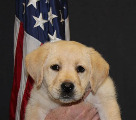 san antonio puppies therapy dogs newest isr wingmen gt joint base san antonio gt news