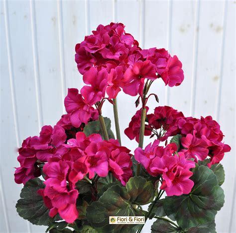 piante con fiori fucsia pianta fiori fucsia