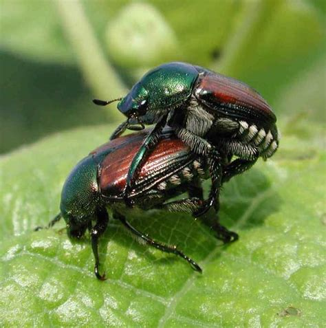 dorn s blog june bug season warning bug talk below