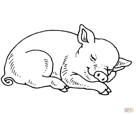 Baby Pig Coloring Pages sleeping baby pig coloring page free printable coloring