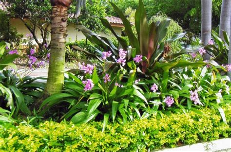 landscape plants for south florida
