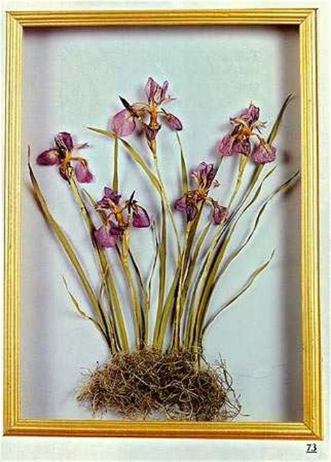 Dried Flower Crafts Book   Dried Floral Arranging   Craft
