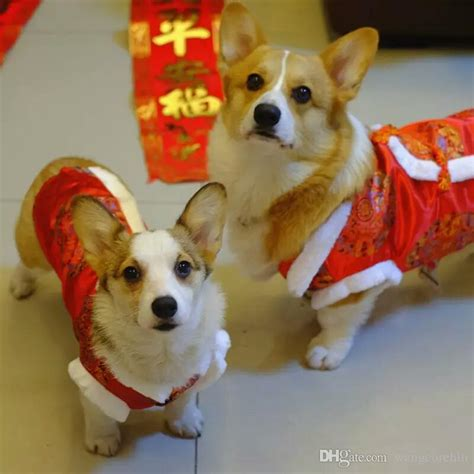 new year costumes for pets 2018 dogs apparel yellow lucky happy new year