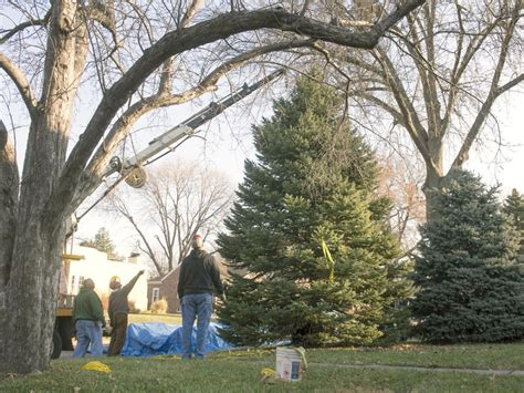 capitol s official nebraska christmas tree comes from