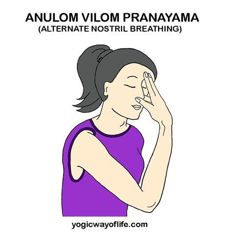 Anuloma Viloma Pranayama Breathing Exercise by Anulom Vilom Pranayama Alternate Nostril Breathing