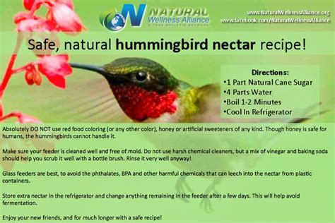 top 28 recipe hummingbird nectar how to make homemade