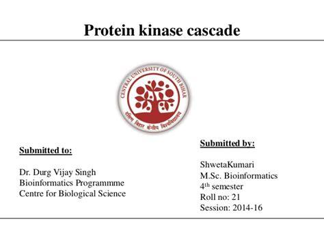 protein kinase cascade protein kinase cascade