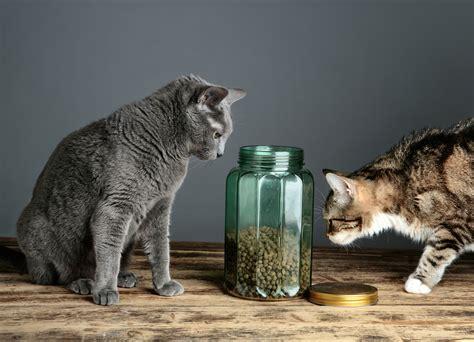 consigli per un alimentazione sana cibo per gatti consigli per un micio sano zoolandia family