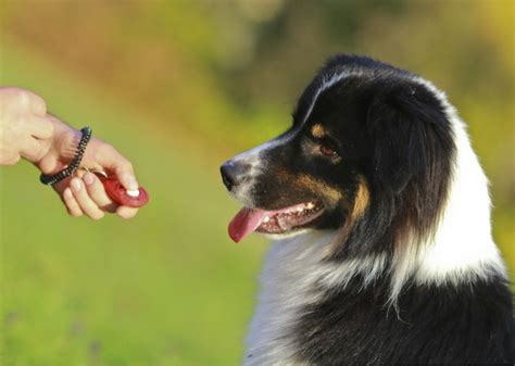 clicker for dogs a beginner s guide to clicker for dogs trainthatpooch