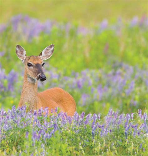 deer resistant plants deer resistant plants