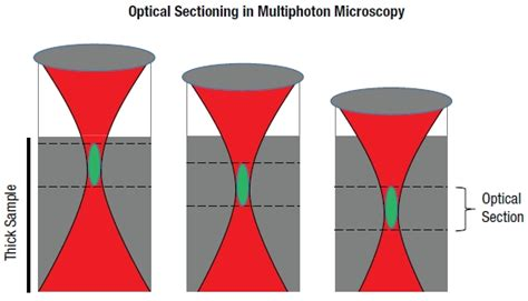 optical sectioning thorlabs com tutorials