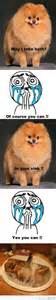why do pomeranians cry allstar poms pomeranians chion line pennslvainia excotic colors adorbs