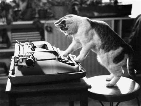 Cat Essay Writer by Kittens On Typewriters The Cultural Cat