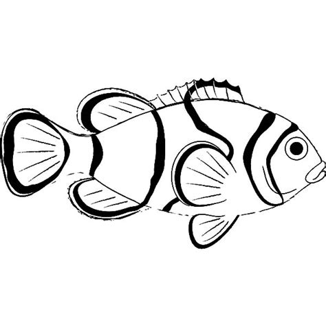 free how to draw clown fish coloring pages