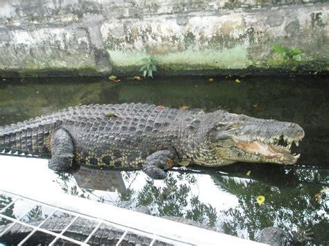 * my beautiful world *: Crocodile Farm (Upper Serangoon)