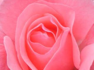 linguaggio fiori amicizia orizzonte linguaggio dei fiori