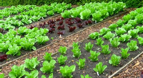 Crop Rotation Explained for Gardening   Love The Garden
